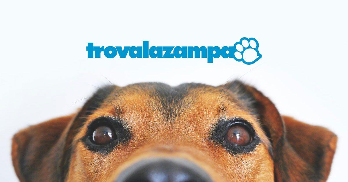 Trovalazampa: il servizio sempre a spasso con te - Immagine: 3